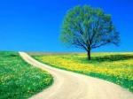 Da steht ein Baum in einer Frühlingswiese und eine Strasse führt nach Irgendwohin.