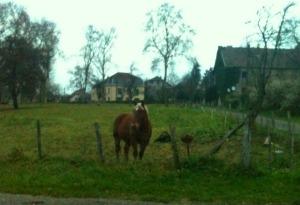 Jeder sollte ein Pferd in Frankreich haben.